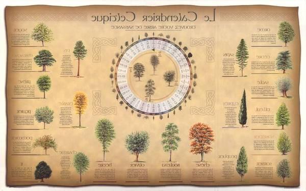 meilleur site astrologie gratuit